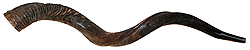 Natural - Yemenite Shofar