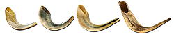 Rams Horn Shofar, Polished Finish